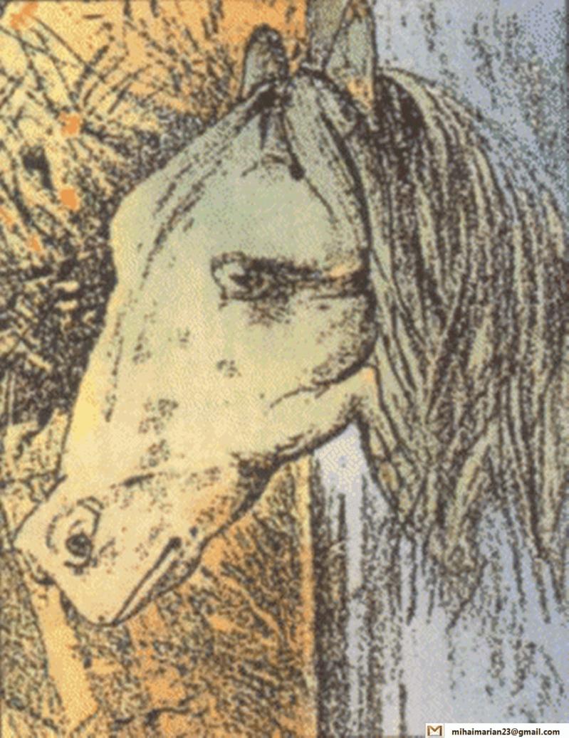 cal sau broasca