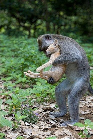 Gest de OM facut de o maimuta! LECTIE data de NATURA: Ce a facut cand a gasit puiul de pisica lovit de masina! FOTO